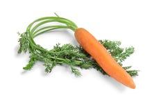 Rijpe wortel op witte achtergrond royalty-vrije stock afbeeldingen