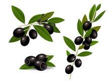 Rijpe zwarte olijven Royalty-vrije Stock Fotografie