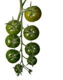 Rijpende groene tomaten stock afbeeldingen