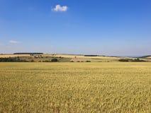 Rijpende tarwegebieden in een lapwerk de landbouwlandschap stock fotografie