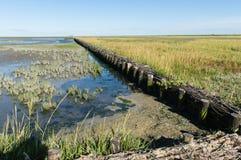 Rijshout dammen Stock Images