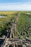 Rijshout dammen Stock Image