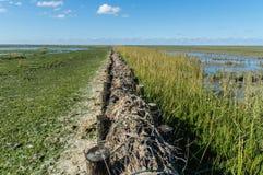 Rijshout dammen Stock Photography