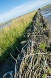 Rijshout dammen Stock Photo