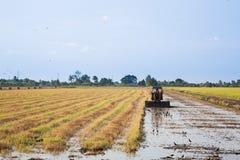 Rijst de Landbouw Royalty-vrije Stock Afbeelding