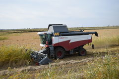 Rijst die krasnodar gebied oogsten Stock Fotografie