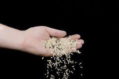 Rijst die uit hand in werking wordt gesteld royalty-vrije stock foto's