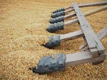 Rijst en padie Stock Afbeelding