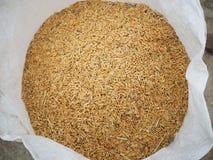 Rijst en padie Stock Foto