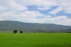 Rijst en Tarwelandbouwbedrijf bij M. Brown Avenue in Tai Tung Stock Foto