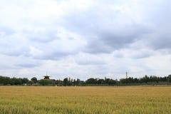 Rijst en wolken royalty-vrije stock foto