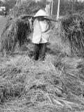 Rijst Famer Royalty-vrije Stock Foto's