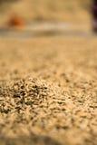 Rijst het drogen in Vietnamese zon Royalty-vrije Stock Foto's