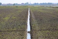 Rijst Italië Stock Afbeelding