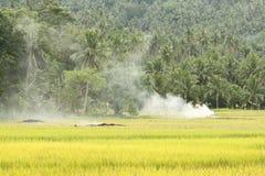 Rijst Paddy Burning royalty-vrije stock afbeeldingen