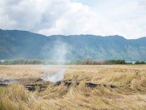 Rijst Straw Open Field Burning On Paddy Farms Effected Air Pollut royalty-vrije stock afbeeldingen