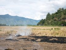 Rijst Straw Open Field Burning On Paddy Farms Effected Air Pollut stock foto's