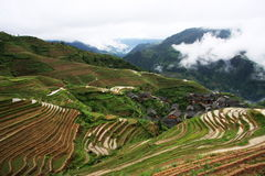 rijst terrassen Stock Foto's