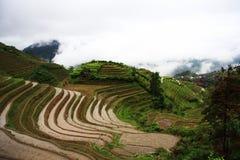rijst terrassen Stock Afbeeldingen