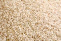 Rijstachtergrond Stock Afbeelding