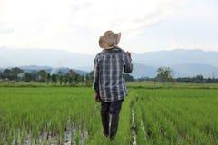 Rijstcultuur Royalty-vrije Stock Afbeelding