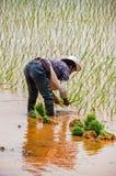 Rijstcultuur dichtbij Kunming, Yunnan stock afbeeldingen