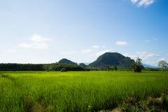 Rijsthoogtepunt Stock Afbeeldingen