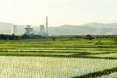 Rijstlandbouwbedrijf dichtbij elektrische centrale Royalty-vrije Stock Foto