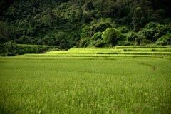 Rijstlandbouwbedrijf in Kengtung Stock Afbeeldingen