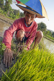 Rijstlandbouwer stock fotografie