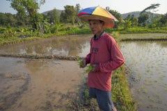 Rijstlandbouwer royalty-vrije stock afbeelding