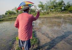 Rijstlandbouwer stock afbeeldingen