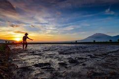 Rijstlandbouwers die in de padievelden met de achtergrond van de bergen werken stock fotografie