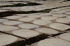 Rijstpannekoeken die op de zon in de fabriek van rijstnoedels drogen Stock Foto