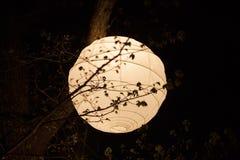 Rijstpapierlantaarn Stock Afbeelding
