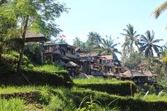 Rijstterras Bali Stock Foto