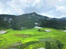 Rijstterras bij van het Parkchom van Doi Inthanon Nationaal de Leren riemdistrict Chiang Mai Province, Thailand in de mening van  Stock Afbeeldingen
