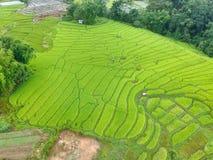 Rijstterras bij van het Parkchom van Doi Inthanon Nationaal de Leren riemdistrict Chiang Mai Province, Thailand in de mening van  Stock Afbeelding