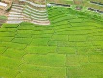 Rijstterras bij van het Parkchom van Doi Inthanon Nationaal de Leren riemdistrict Chiang Mai Province, Thailand in de mening van  Royalty-vrije Stock Afbeelding