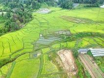 Rijstterras bij van het Parkchom van Doi Inthanon Nationaal de Leren riemdistrict Chiang Mai Province, Thailand in de mening van  Stock Foto