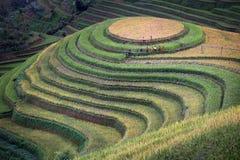 Rijstterras in Vietnam stock afbeelding