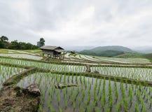 Rijstterrassen bij mea jamchiangmai Stock Foto