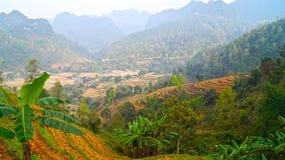 Rijstterrassen de Noord- van Vietnam Stock Afbeeldingen