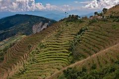 Rijstterrassen in de Vallei van Katmandu, Nepal Stock Afbeeldingen