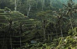 Rijstterrassen in Indonesië Royalty-vrije Stock Foto