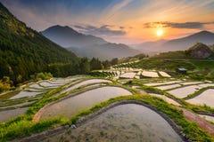 Rijstterrassen in Japan stock foto's