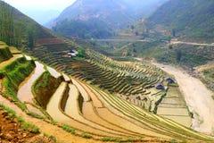 Rijstterrassen, paddigebieden in bergen Stock Foto's