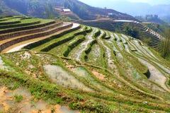 Rijstterrassen, paddigebieden in bergen Royalty-vrije Stock Foto