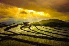 Rijstterrassen in Thailand Padievelden op terrasvormig in rainny seizoen in Chiang Mai Royalty-vrije Stock Fotografie