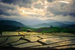Rijstterrassen in Thailand Padievelden op terrasvormig in rainny seizoen in Chiang Mai Stock Afbeeldingen